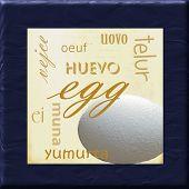 Egg Kitchen