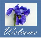 Iris Welcome in White and Blue