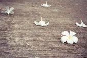 Plumeria drop on cement floor