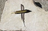Feather Cross
