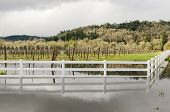 Wine Flood