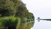 Floating In Boat In Briere Marsh, France