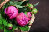Beautiful peonies in wicker basket on  wooden  background
