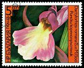 Vintage  Postage Stamp. Dactylorniza Romana.