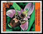 Vintage  Postage Stamp. Ophrys Cornuta Stev.