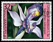 Vintage  Postage Stamp.limodorum Abortivum.