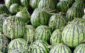 Ripe watermelons