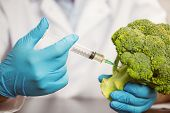 Food scientist injecting head of broccoli at the university