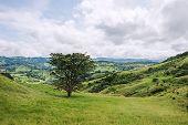 View Over Monteverde