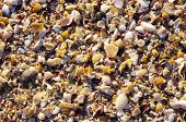 picture of snail-shell  - Mussel shells and snails on the beach closeup - JPG