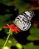 BUTTERFLY ON FLOWERS 9