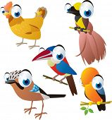 vector isolated cartoon cute animals set: birds: hen, bird of paradise, cockerel, jay, arasari