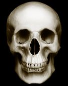 Skull Isolated On Dark Background
