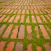 pic of creeper  - Green creepers sprouting and growing between the cracks around individual bricks - JPG