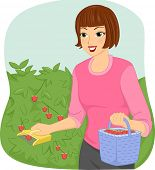 Illustration of a Woman Using a Fruit Picker to Gather Berries