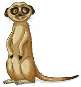 Illustration of a close up meerkat
