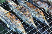 Grilled mackerel fish, DOF