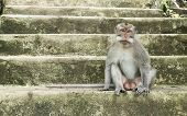 Monkey Sits On The Stairs