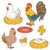 picture of chicken  - Set of cute farm animals and objects - JPG