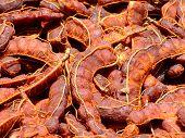 foto of tamarind  - Tamarind Brown avant - JPG