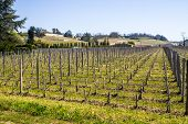 stock photo of bordeaux  - growth of a vineyard in the countryside of Saint Emilion Bordeaux France - JPG