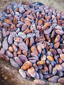 foto of cocoa beans  - Close up of Cocoa beans in an old bowl - JPG