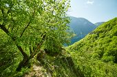 stock photo of afforestation  - Beautiful landscape with afforested mountain on springtime - JPG