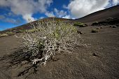 picture of canary-islands  - wild volcanic landscape at Timanfaya National Park Lanzarote Island Canary Islands Spain - JPG
