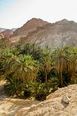 image of oasis  - View of the mountain oasis Chebika in Tunisia  - JPG