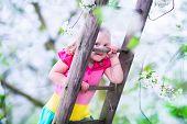 stock photo of apple orchard  - Little girl climbing a ladder in a fruit garden - JPG