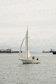 stock photo of sloop  - A sloop sail boat coasts along the calm waters of Long Beach harbor - JPG
