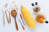 Dangerous Food From  Laboratory Agricultural Grains And Corn With Laboratory Tools Isolated On White poster