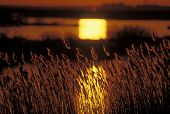 Sunrise in the salt marsh