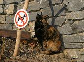 Joke - A Cat, No Dogs