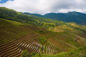 Montaña de arroz terrazas Backbone de dragones