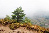 paisaje con árbol de pino
