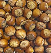 stock photo of nutter  - large dark hazelnuts - JPG
