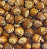 stock photo of nutter  - large dark hazelnuts - JPG