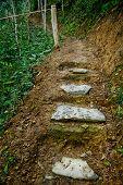 Wild Stair