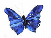 foto of blue butterfly  - model of the blue butterfly on the white background - JPG