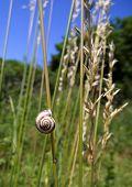 Caracol na grama seca