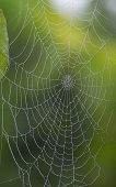 Diamant Web