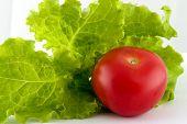 Lettuce And Tomato, Salad Basics