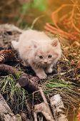 Kitten In The Summer Garden poster