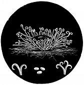 Ahorn Fäulnis mikroskopisch kleine Pflanze Vintage illustration