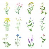 Wild Herbs Color Set Isolated. Wildflowers, Herbs, Leafs. Garden And Wild Foliage, Flowers, Branches poster