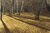 Autumn In The Forest. Fallen Leaves On The Ground. Landscape Reserve Teply Stan, Moscow, Russia. poster