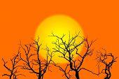 Sun And Trees Illustration