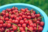 Fresh Sweet Red Cherry In A Bowl. Ripe Sweet Cherry. Summer Berry. Garden Harvest. Fresh Berries. Ha poster