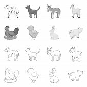 Isolated Object Of Breeding And Kitchen Symbol. Set Of Breeding And Organic Vector Icon For Stock. poster